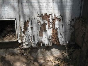 termite damage in broward county house