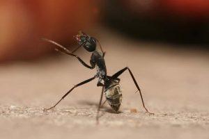 ant on the floor