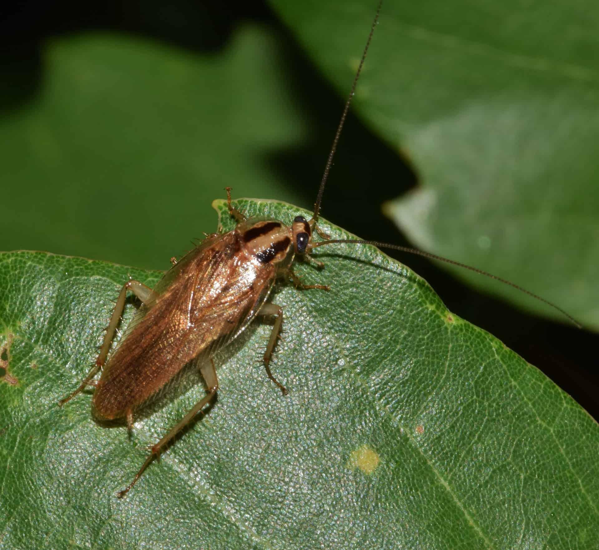 cockroach on leaf