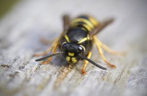 wasp on a picnic table